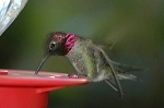 Best 1 Hummingbird Feeders