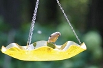 Bird Bath ~ Hanging ~ 3 Colors Available