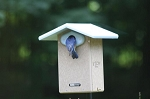 Recycled Ultimate Bluebird House w/Camera