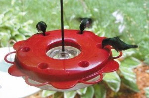 When Should I Stop Feeding Hummingbirds?