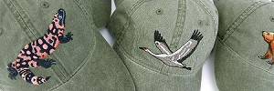 Bird Embroidered Caps